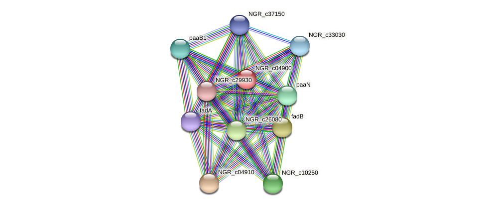 NGR_c04900 protein (Sinorhizobium fredii NGR234) - STRING interaction network