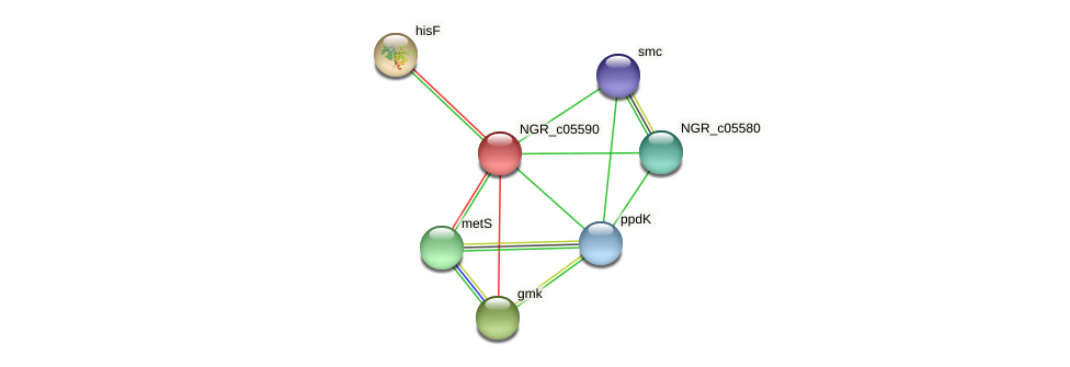 NGR_c05590 protein (Sinorhizobium fredii NGR234) - STRING interaction network