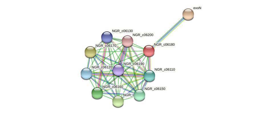 NGR_c06180 protein (Sinorhizobium fredii NGR234) - STRING interaction network