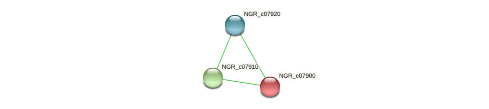 NGR_c07900 protein (Sinorhizobium fredii NGR234) - STRING interaction network