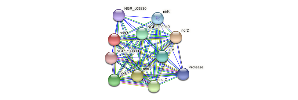 norQ protein (Sinorhizobium fredii NGR234) - STRING interaction network