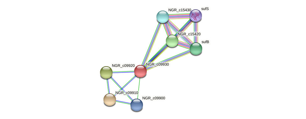 NGR_c09930 protein (Sinorhizobium fredii NGR234) - STRING interaction network
