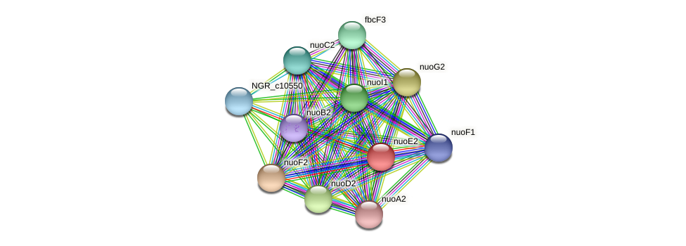 nuoE2 protein (Sinorhizobium fredii NGR234) - STRING interaction network