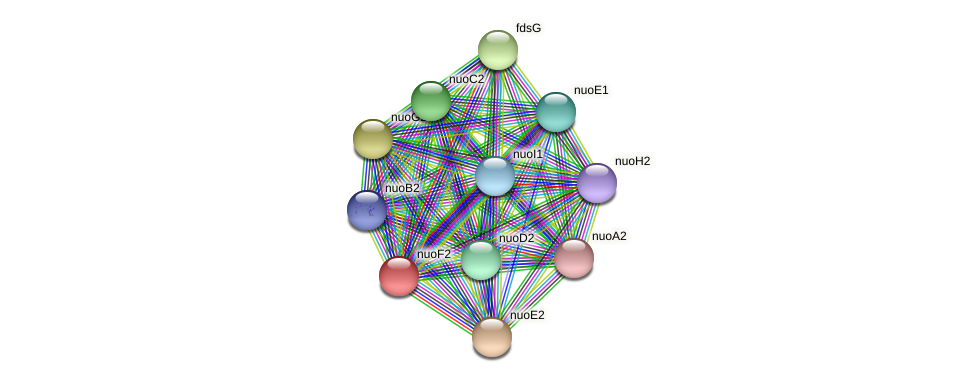 nuoF2 protein (Sinorhizobium fredii NGR234) - STRING interaction network