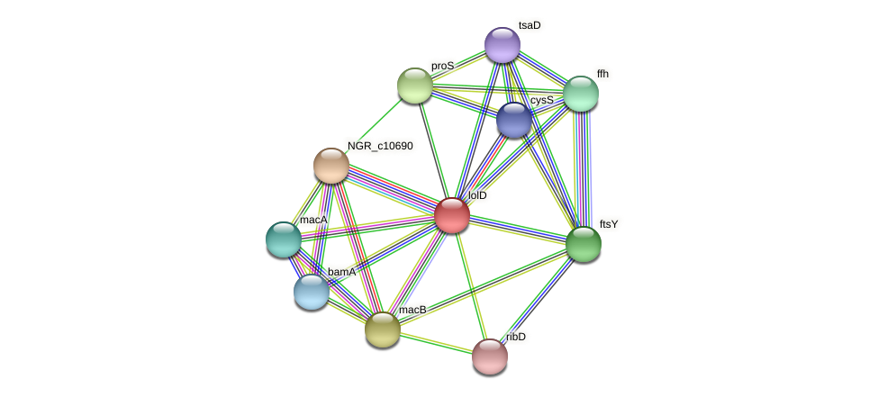 lolD protein (Sinorhizobium fredii NGR234) - STRING interaction network