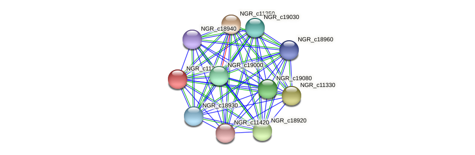 NGR_c11340 protein (Sinorhizobium fredii NGR234) - STRING interaction network