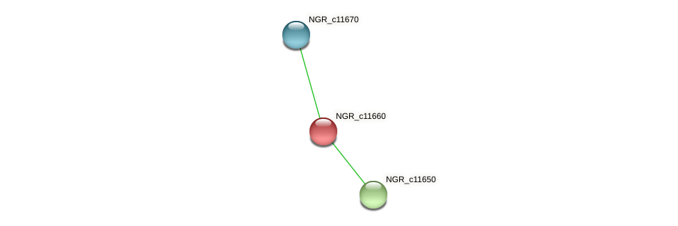 NGR_c11660 protein (Sinorhizobium fredii NGR234) - STRING interaction network