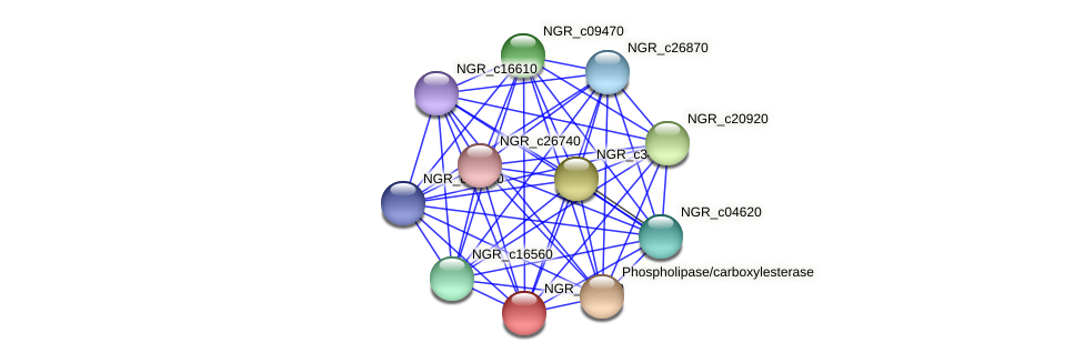 NGR_c11850 protein (Sinorhizobium fredii NGR234) - STRING interaction network