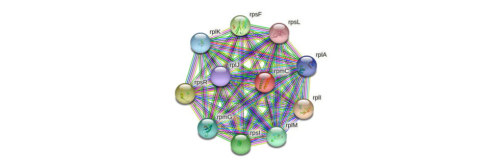 rpmC protein (Sinorhizobium fredii NGR234) - STRING interaction network