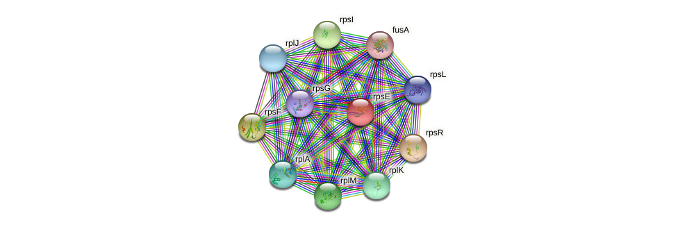 rpsE protein (Sinorhizobium fredii NGR234) - STRING interaction network