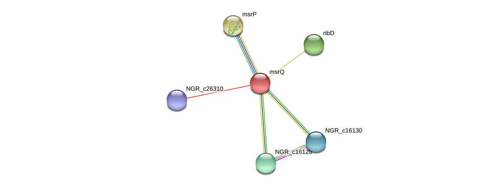 msrQ protein (Sinorhizobium fredii NGR234) - STRING interaction network