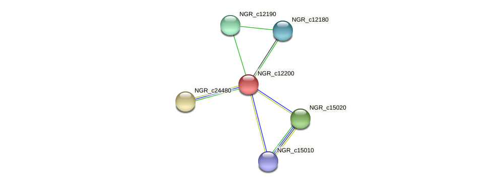 NGR_c12200 protein (Sinorhizobium fredii NGR234) - STRING interaction network