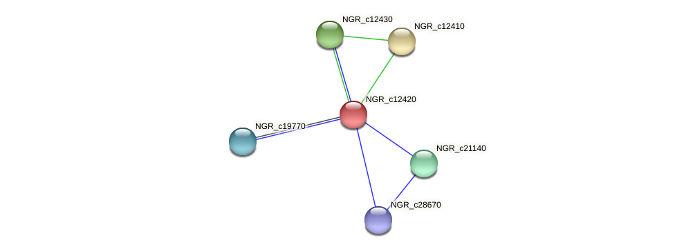 NGR_c12420 protein (Sinorhizobium fredii NGR234) - STRING interaction network