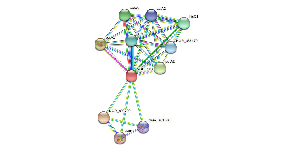 NGR_c13000 protein (Sinorhizobium fredii NGR234) - STRING interaction network
