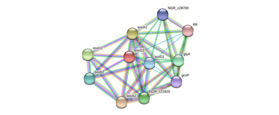 soxG2 protein (Sinorhizobium fredii NGR234) - STRING interaction network