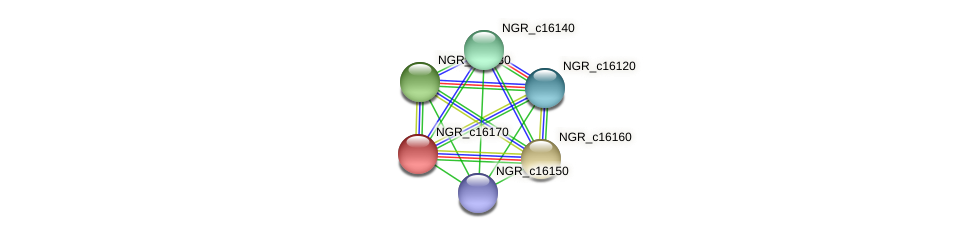 NGR_c16170 protein (Sinorhizobium fredii NGR234) - STRING interaction network