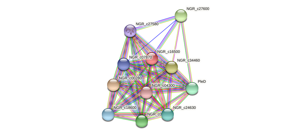 NGR_c16500 protein (Sinorhizobium fredii NGR234) - STRING interaction network