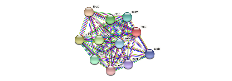 fbcB protein (Sinorhizobium fredii NGR234) - STRING interaction network