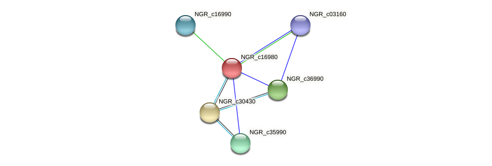NGR_c16980 protein (Sinorhizobium fredii NGR234) - STRING interaction network