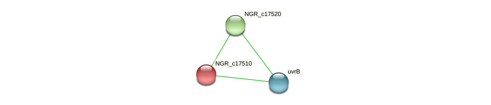 NGR_c17510 protein (Sinorhizobium fredii NGR234) - STRING interaction network