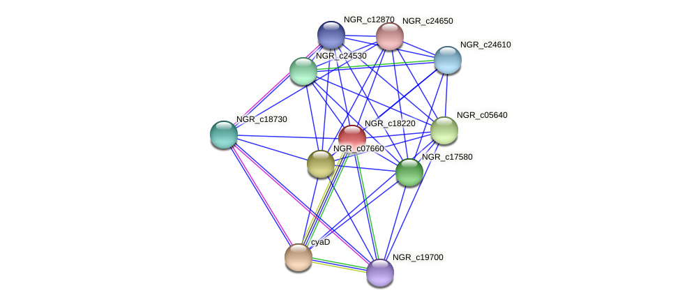 NGR_c18220 protein (Sinorhizobium fredii NGR234) - STRING interaction network