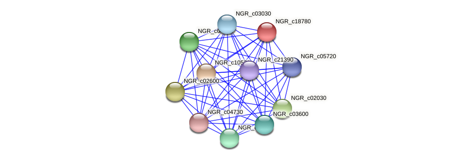NGR_c18780 protein (Sinorhizobium fredii NGR234) - STRING interaction network