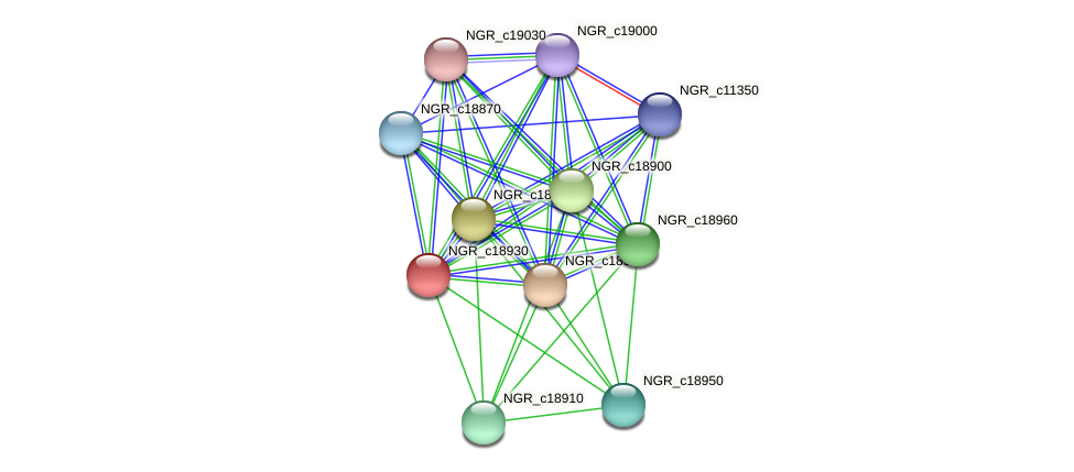 NGR_c18930 protein (Sinorhizobium fredii NGR234) - STRING interaction network