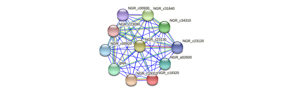 NGR_c19320 protein (Sinorhizobium fredii NGR234) - STRING interaction network