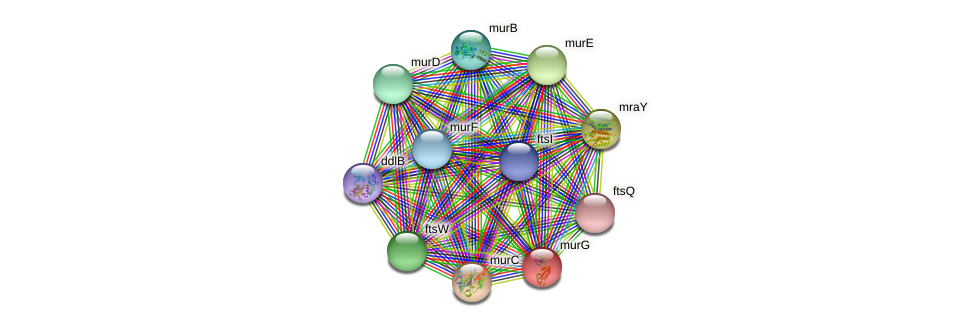 murG protein (Sinorhizobium fredii NGR234) - STRING interaction network