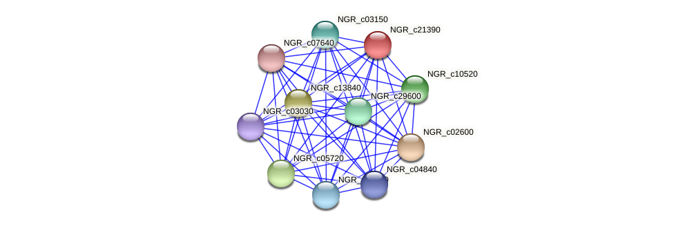 NGR_c21390 protein (Sinorhizobium fredii NGR234) - STRING interaction network