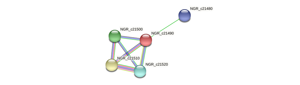 NGR_c21490 protein (Sinorhizobium fredii NGR234) - STRING interaction network