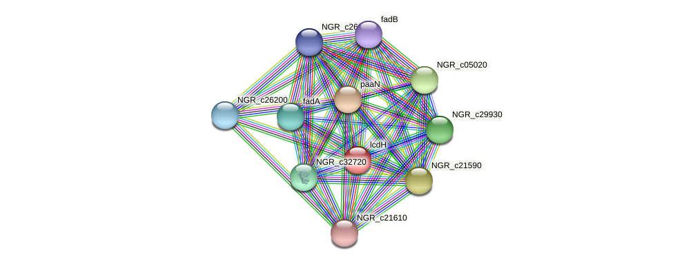 lcdH protein (Sinorhizobium fredii NGR234) - STRING interaction network