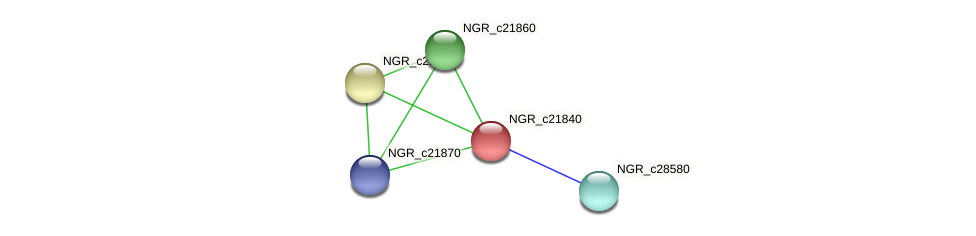 NGR_c21840 protein (Sinorhizobium fredii NGR234) - STRING interaction network