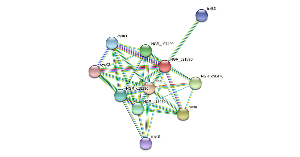 NGR_c21870 protein (Sinorhizobium fredii NGR234) - STRING interaction network