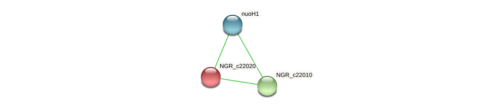 NGR_c22020 protein (Sinorhizobium fredii NGR234) - STRING interaction network