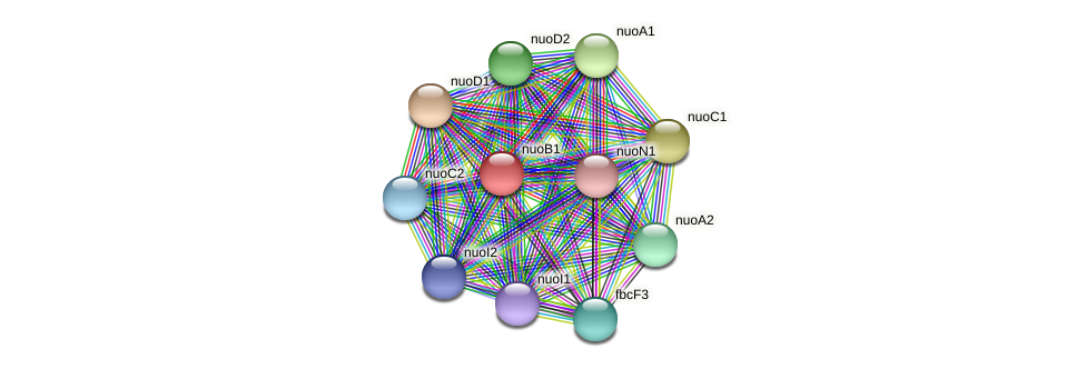 nuoB1 protein (Sinorhizobium fredii NGR234) - STRING interaction network