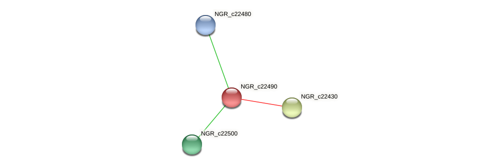 NGR_c22490 protein (Sinorhizobium fredii NGR234) - STRING interaction network