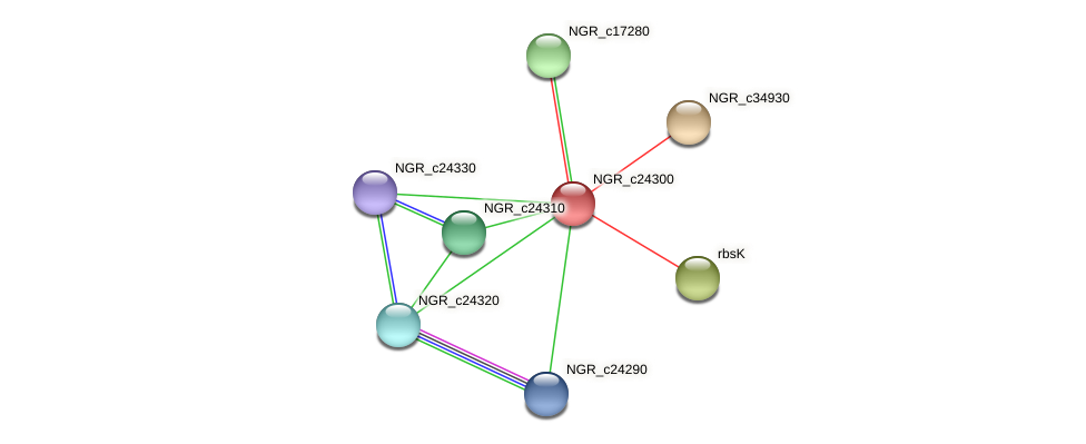 NGR_c24300 protein (Sinorhizobium fredii NGR234) - STRING interaction network