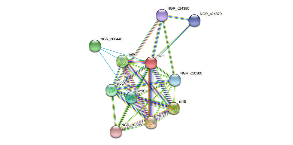 NGR_c24400 protein (Sinorhizobium fredii NGR234) - STRING interaction network