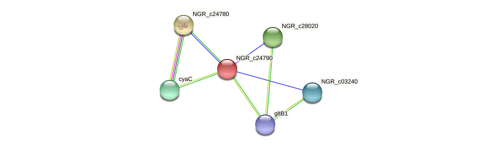 NGR_c24790 protein (Sinorhizobium fredii NGR234) - STRING interaction network