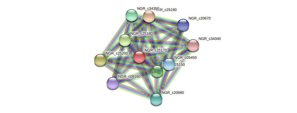 NGR_c25170 protein (Sinorhizobium fredii NGR234) - STRING interaction network