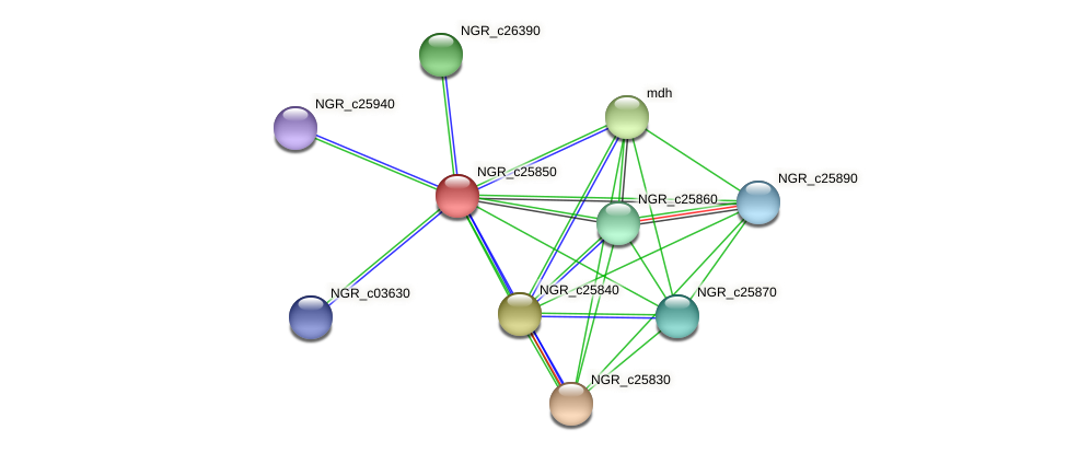 NGR_c25850 protein (Sinorhizobium fredii NGR234) - STRING interaction network