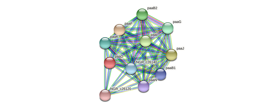 paaD protein (Sinorhizobium fredii NGR234) - STRING interaction network