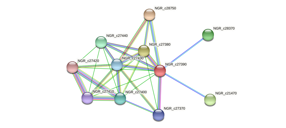NGR_c27390 protein (Sinorhizobium fredii NGR234) - STRING interaction network