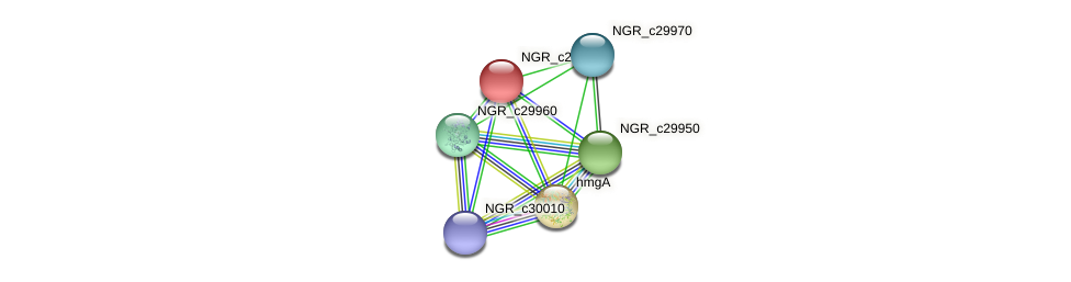 NGR_c29990 protein (Sinorhizobium fredii NGR234) - STRING interaction network
