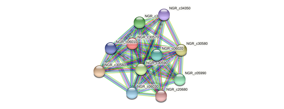 NGR_c30570 protein (Sinorhizobium fredii NGR234) - STRING interaction network