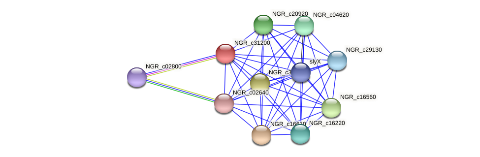 NGR_c31200 protein (Sinorhizobium fredii NGR234) - STRING interaction network