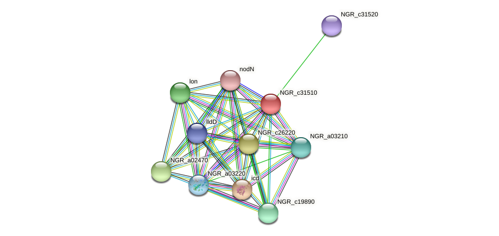 NGR_c31510 protein (Sinorhizobium fredii NGR234) - STRING interaction network