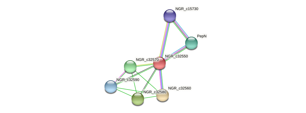NGR_c32550 protein (Sinorhizobium fredii NGR234) - STRING interaction network