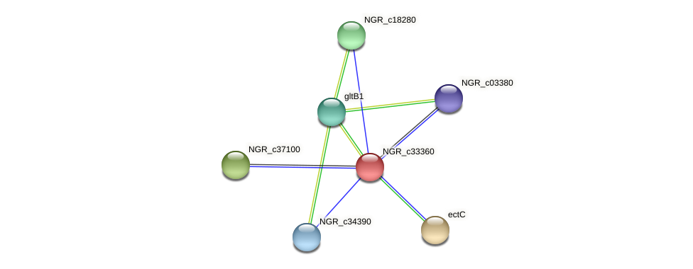 NGR_c33360 protein (Sinorhizobium fredii NGR234) - STRING interaction network